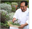 Hotel chef picking herbs